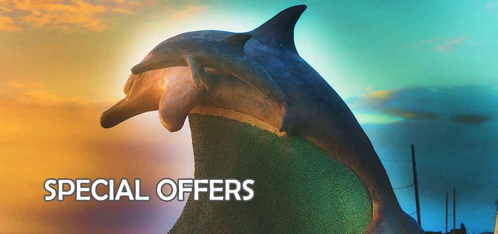 special offers photographer port elizabeth