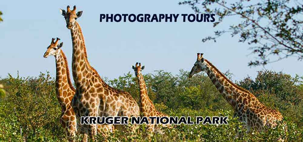 nature and wildlife photographer port elizabeth