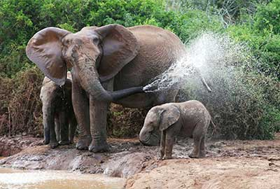 Photography Tours Addo South Africa